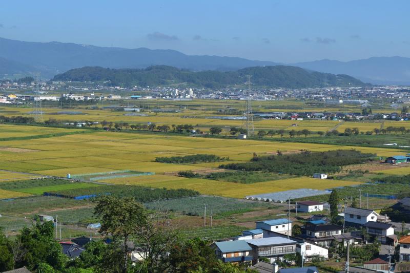 高台から延徳田んぼを見る