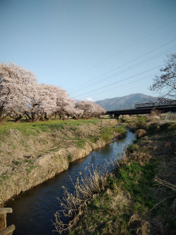 須坂村山の桜と長野電鉄