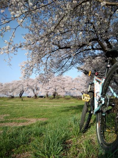 須坂相之島桜スポット