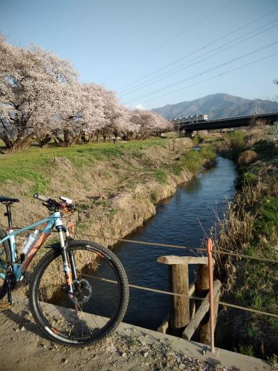 須坂村山桜と長野電鉄