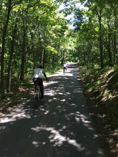 小布施牧場隣の森の中の道