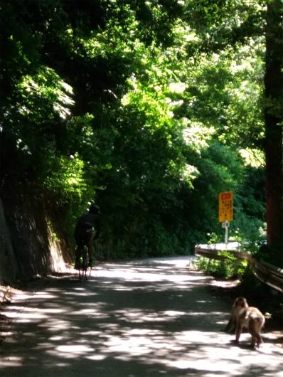 渋温泉車道のサル