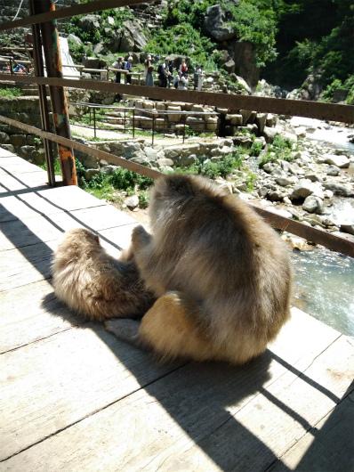 野猿公苑サルの背中