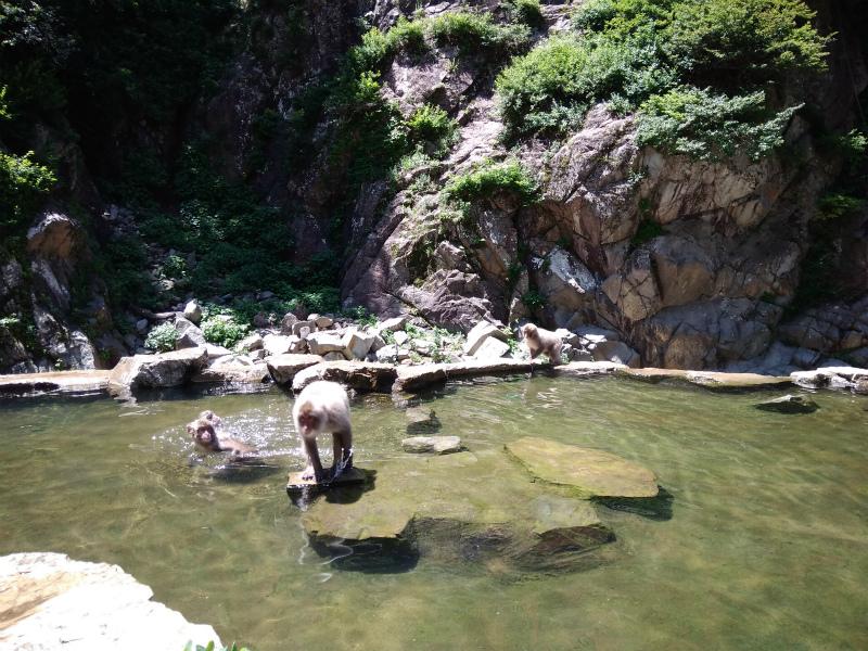 温泉のサル