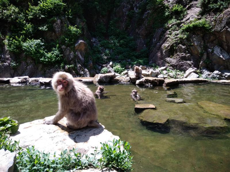 地獄谷野猿公苑へサイクリング