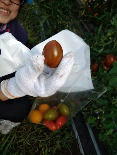 クロっぽいトマト