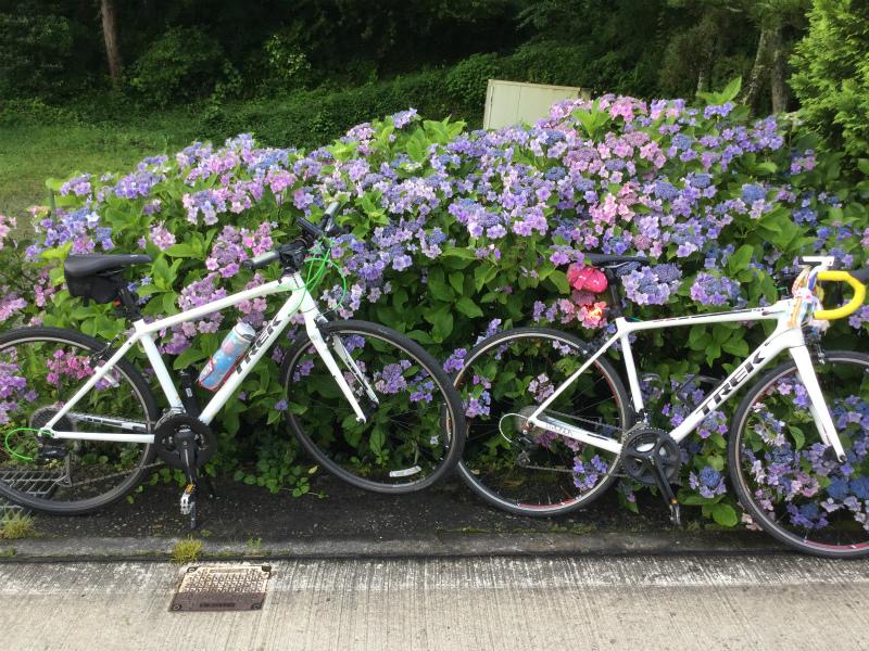 山田温泉の紫陽花と自転車