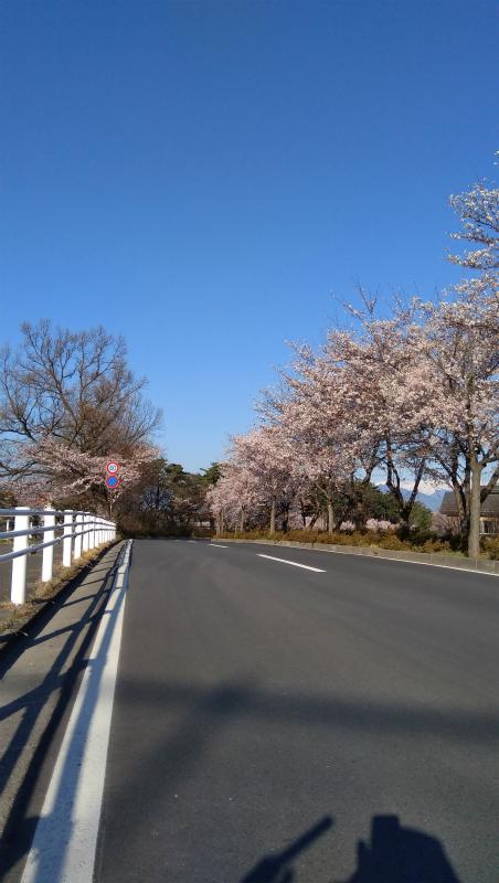 須坂看護学校横桜並木