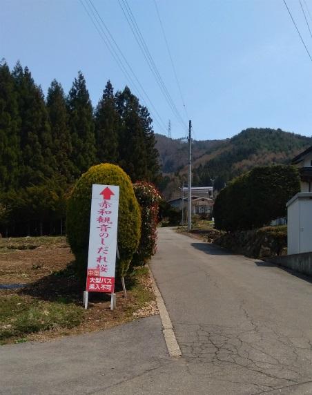 赤和観音の枝垂れ桜へ行く道