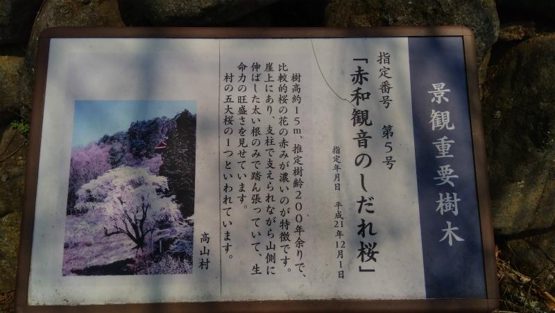 赤和観音の枝垂れ桜看板