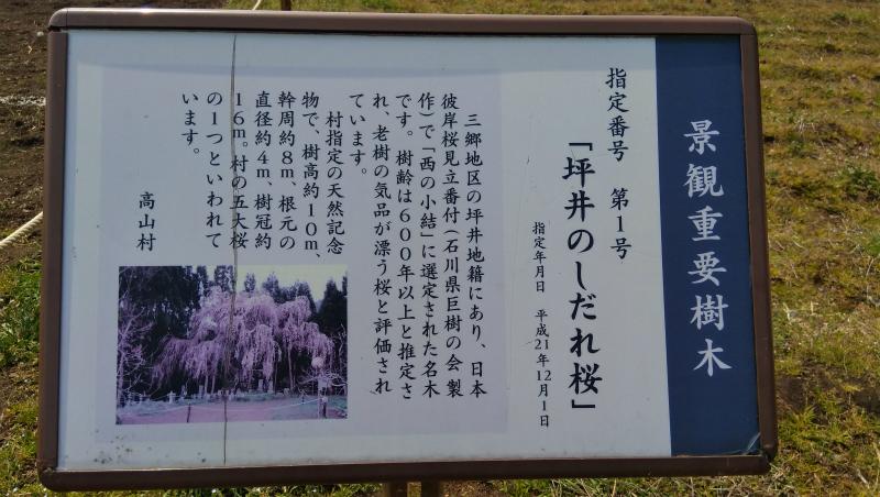 坪井の枝垂れ桜看板