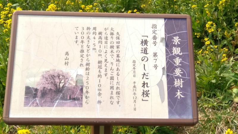 横道の枝垂れ桜看板