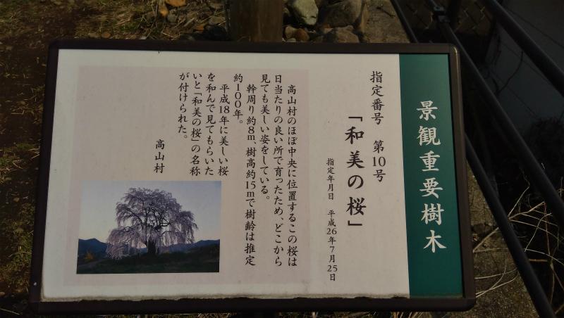 高山村和美の桜看板