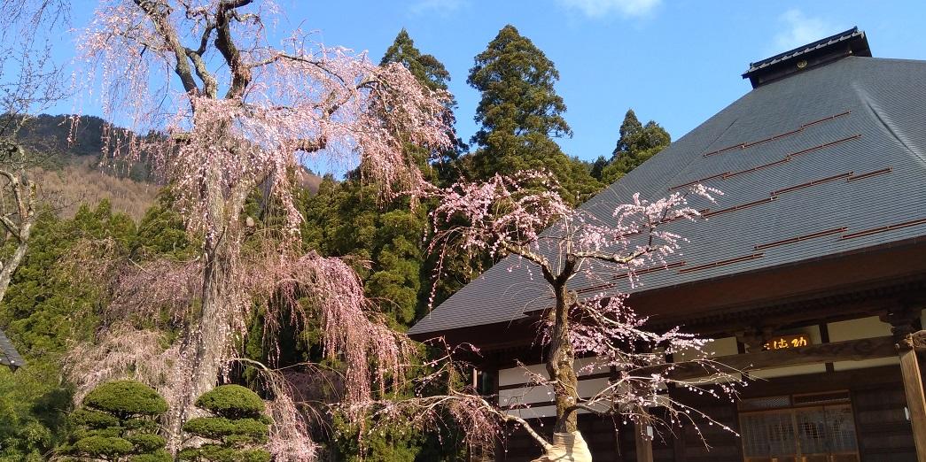 須坂豊丘の五大桜めぐり