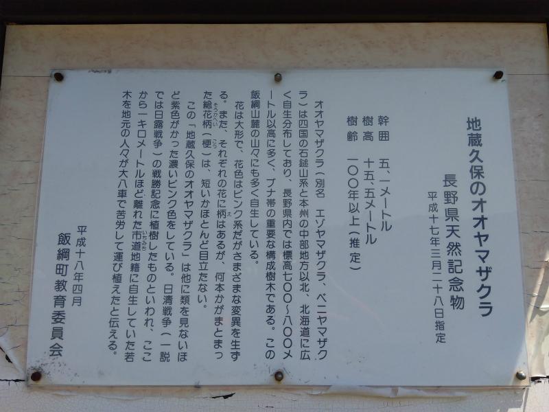 地蔵久保のオオヤマザクラ看板