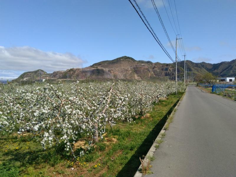 高山村リンゴ畑