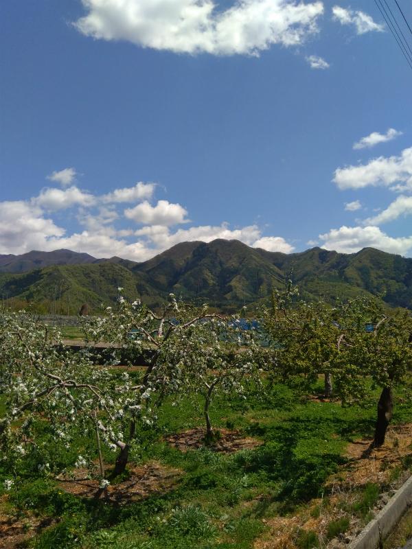 リンゴ畑と山