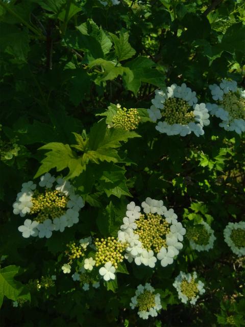 フローラルガーデンおぶせの花