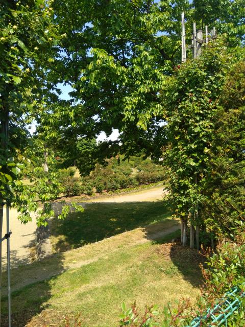 一本木公園