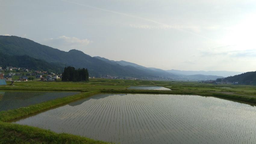 飯山の田んぼ