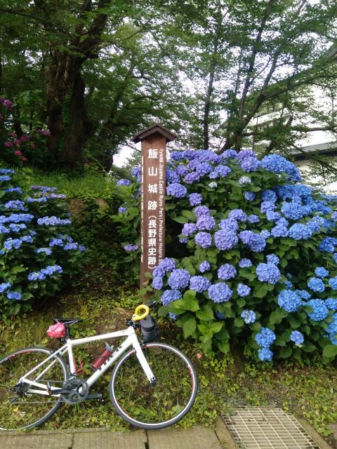 飯山城紫陽花サイクリング