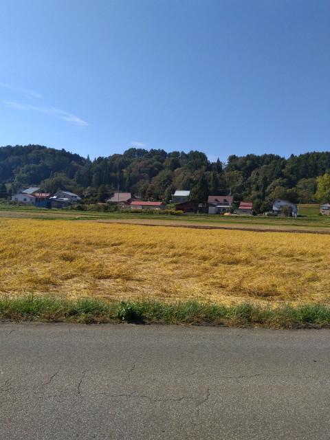 飯山金色の野
