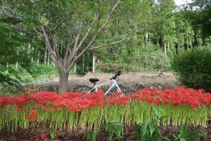 彼岸花とクロスバイク