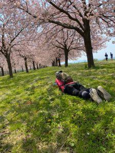 小布施千曲川堤防の桜の下で