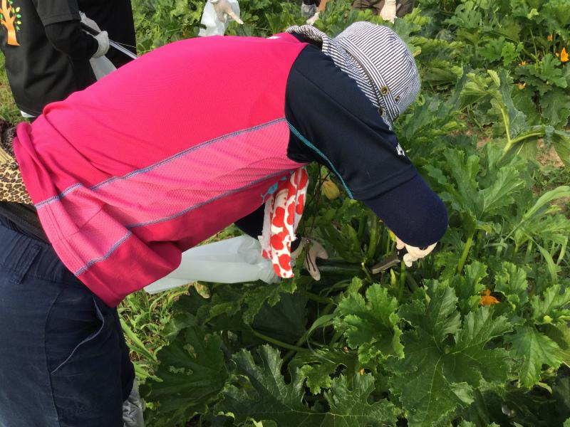 小布施の農家さんちで朝食ライド 収穫体験