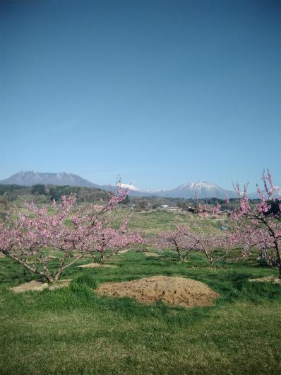 丹霞郷ライド 桃の花と北信五岳