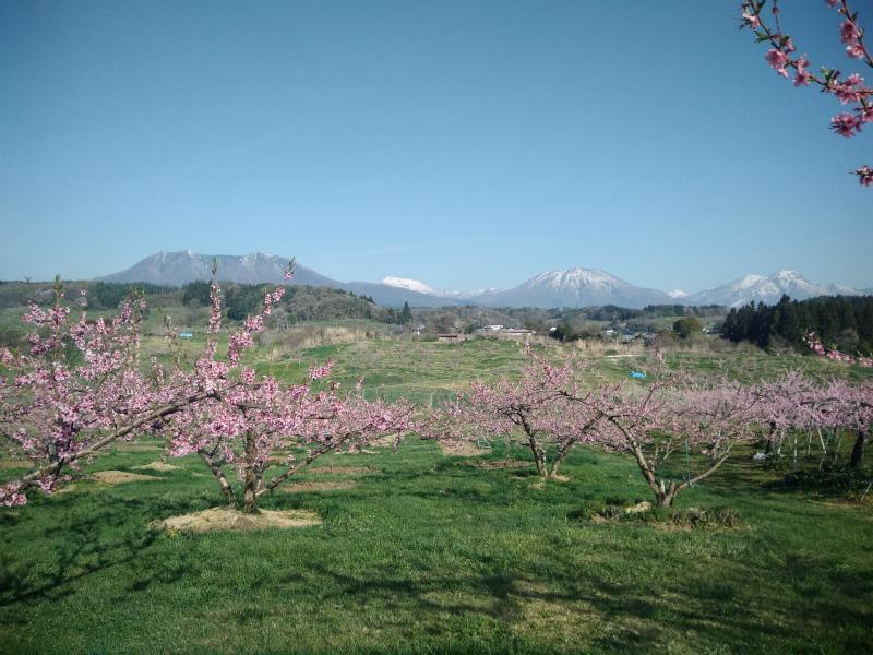丹霞郷ライド桃の花と飯綱山