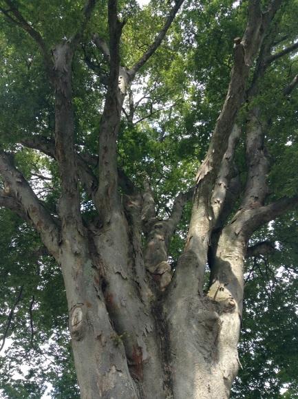 飯山巨木を巡るサイクリング 加保戸神社