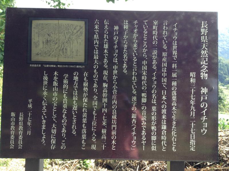 神戸の大銀杏看板