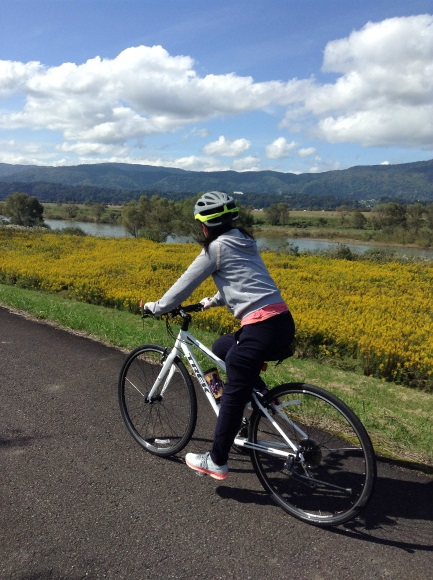 飯山巨木を巡るサイクリング サイクリングロード菜の花みたい