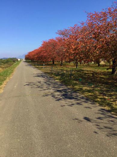 秋の小布施サイクリングロード