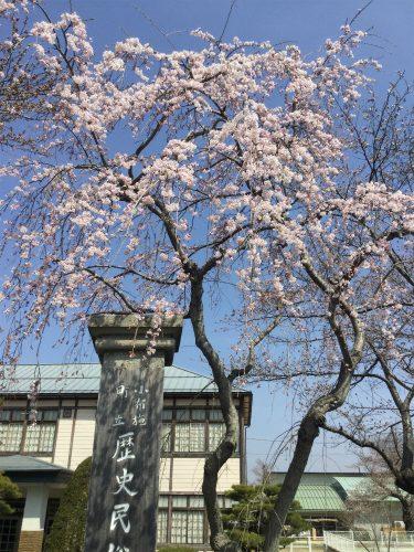 小布施岩松院せせらぎ緑道サイクリング 資料館桜