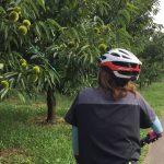 小布施早朝サイクリング90分コース