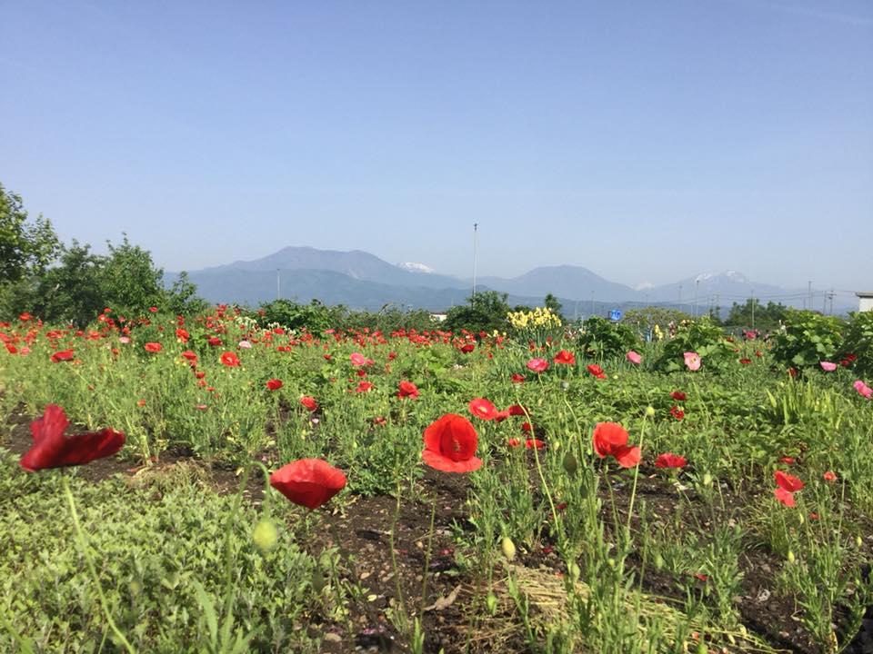 須坂へサイクリング 日滝の農道お花畑