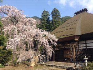 須坂豊丘の桜